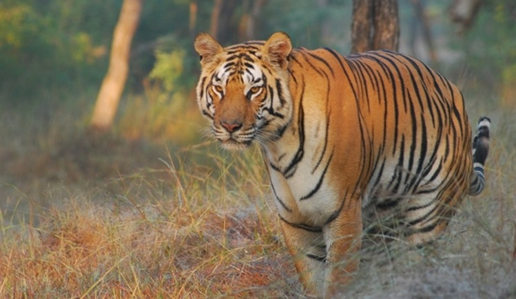 Help India's First Private Sanctuary