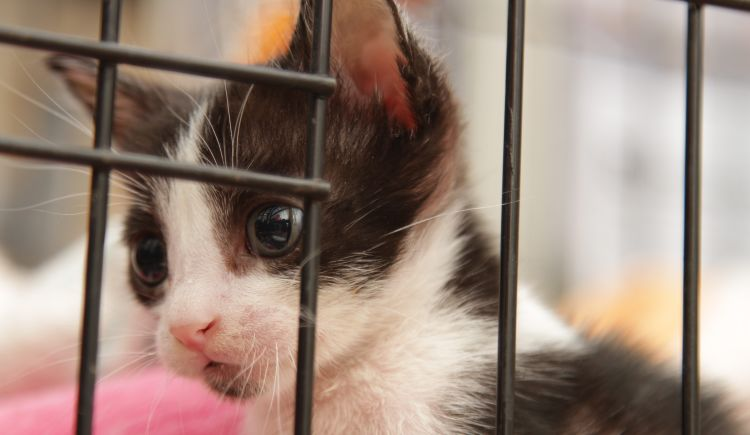 Help Fund A Low-Cost Community Veterinary Clinic