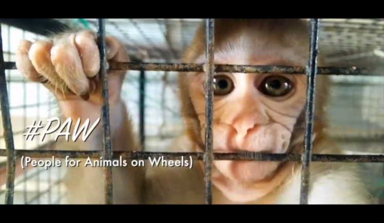 #PAW (People for Animals on Wheels)