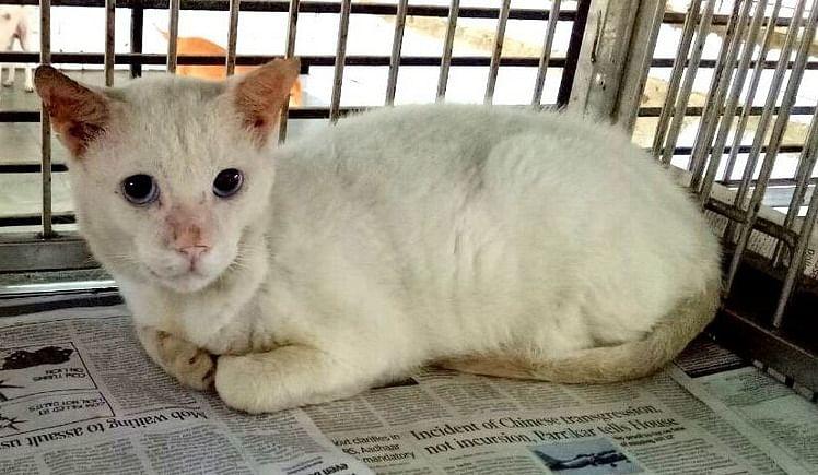 Help IDA,India Spay and Neuter Mumbai Street Cats