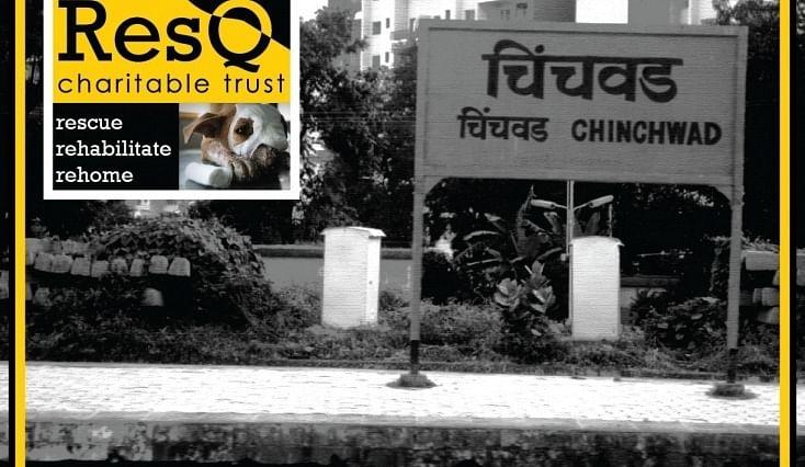 Animal Rescue NGO for PCMC
