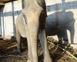 Help us Fight for the Elephants against Gemini Circus in Karnataka