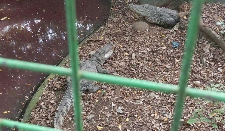 Let's Close Down Illegal Kerala Zoo